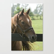 Creator - Old Friends Equine, Georgetown KY Canvas Print