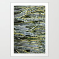 Snake Plants Art Print