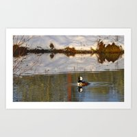 Merganser Duck Art Print
