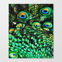 Oiled Peacock Canvas Print