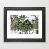 Winter Pine Framed Art Print
