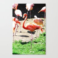 THE DANCE OF THE FLAMINGOS Canvas Print