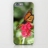 Papillon III iPhone 6 Slim Case