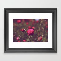 Red Rose Framed Art Print