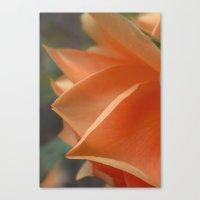 Apricot Petals Canvas Print
