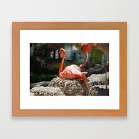 Sitting Flamingo Framed Art Print