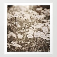Roaming Through Wild Flower Fields Art Print