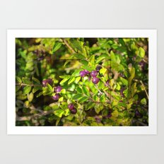 berry Art Print