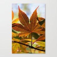 Japanese Maple Leaf Canvas Print