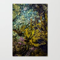 Rockpool Canvas Print