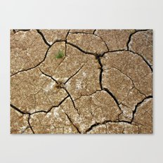dry soil Canvas Print
