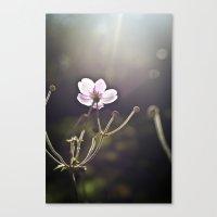 October Flower. Canvas Print