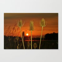 Threes Canvas Print
