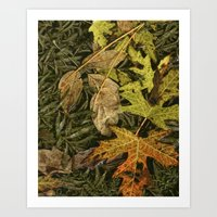 Fallen Autumn Leaves on the Shore of Hall Lake Art Print