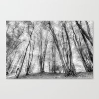 The Ghost Forest Canvas Print