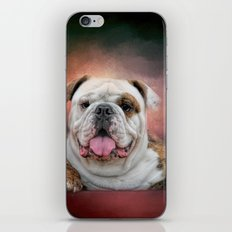Hanging Out - Bulldog iPhone & iPod Skin