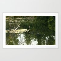 Double-crested cormorant  Art Print
