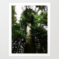 Redwoods #3 Art Print