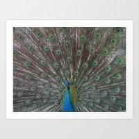 Peacock. Art Print
