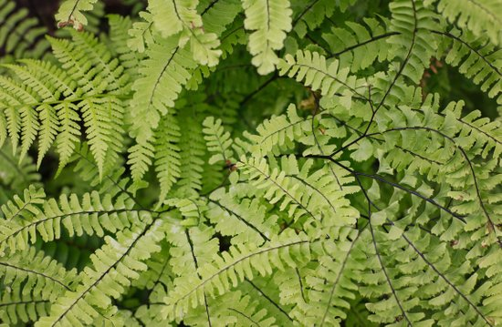 ferns. Art Print