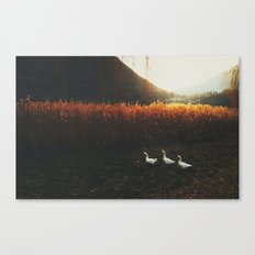 Walking geese Canvas Print