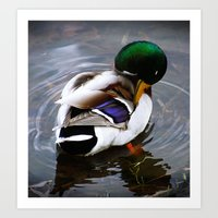 Duck Bath   Art Print