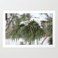 Winter Pine Art Print