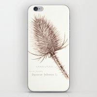 Wild Teasel Botanical Po… iPhone & iPod Skin