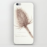 Wild Teasel botanical poster iPhone & iPod Skin