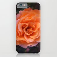iPhone & iPod Case featuring Holland Park Rose by Great North Eastern