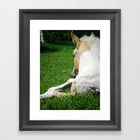 Horse In The Grass Framed Art Print