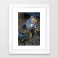 Mr. Squirrel! Framed Art Print
