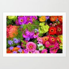 POP Zinnias Art Print