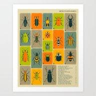 BEETLES OF NORTH AMERICA Art Print