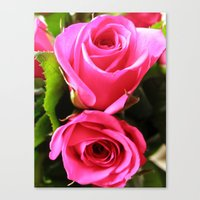 Pink Roses #1 Canvas Print