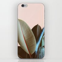 Ficus Elastica #1 iPhone & iPod Skin