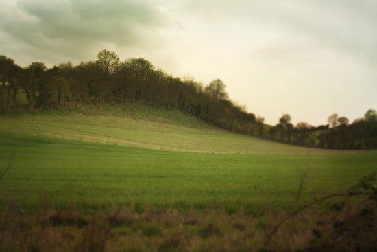 green meadows Art Print