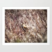 Woodland Fox - Wildlife Art Print