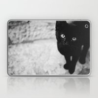 Croatian Kitten Laptop & iPad Skin