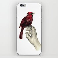 Cardinal Focus iPhone & iPod Skin