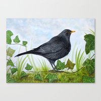 The Blackbird Canvas Print