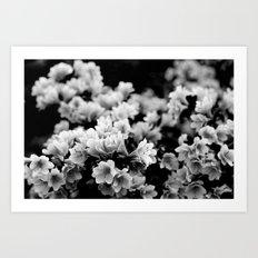 Flora 1 / Black & white series Art Print