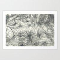 Dandelion 3 Art Print
