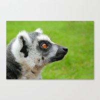 Lemur At Lake District Z… Canvas Print
