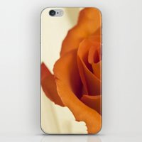 Autumn Rose iPhone & iPod Skin