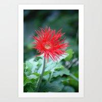 Red Hot Daisy Art Print