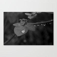 Tear Drop Black & White  Canvas Print