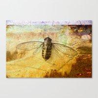 Life Cycle of a Cicada Canvas Print