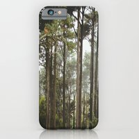 early morning Trees iPhone 6 Slim Case