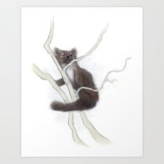 Pine Marten 2 Art Print